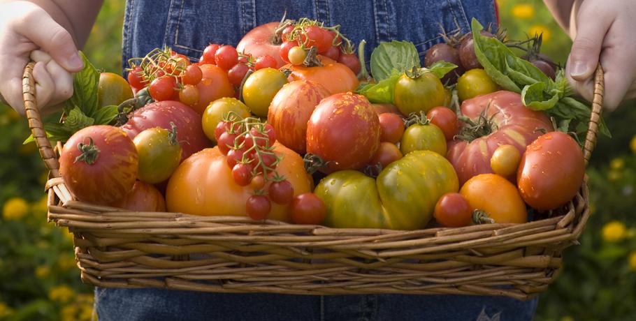 Fruktos – lagom är bäst