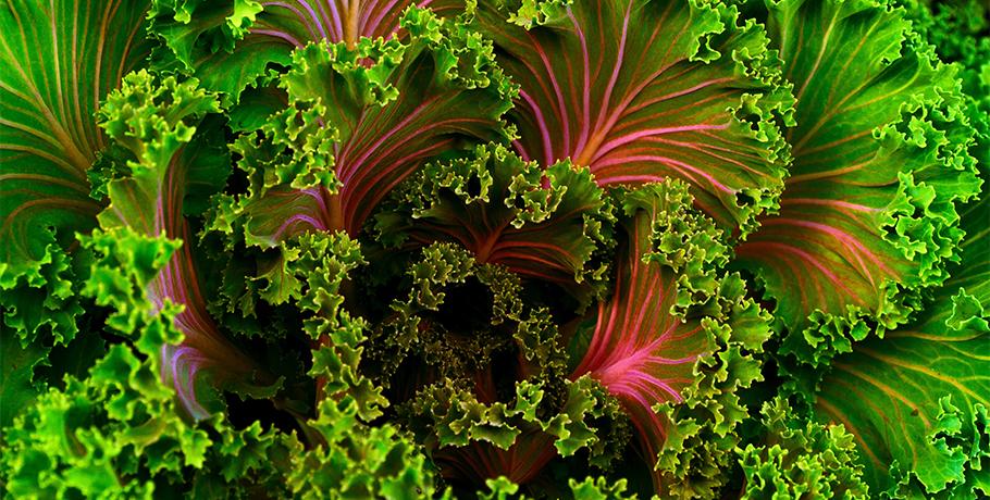 Matsmältningsenzymer – en hjälp när magen är i olag