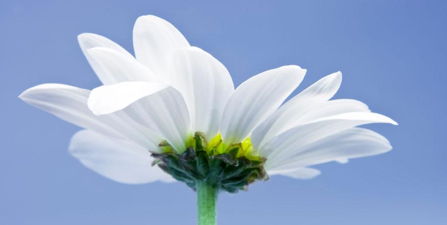Quercetin – allergikerns vän?